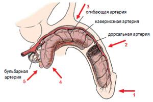 лечение эректильной дисфункции методом увт