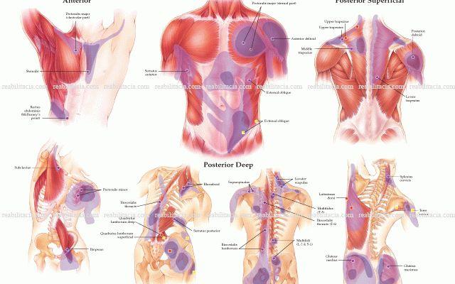 лечение боли в спине ударно-волновой терапией киев
